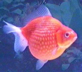 ikan favorit dan maknanya