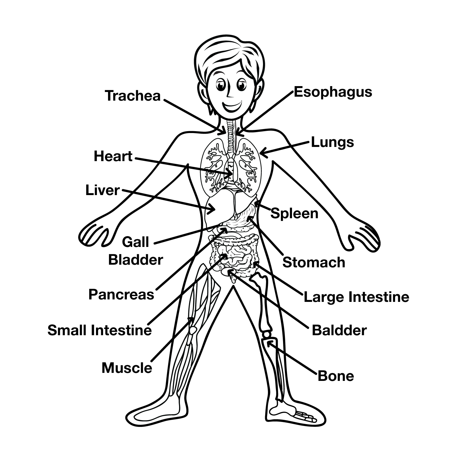 human organ systems coloring pages - photo#35