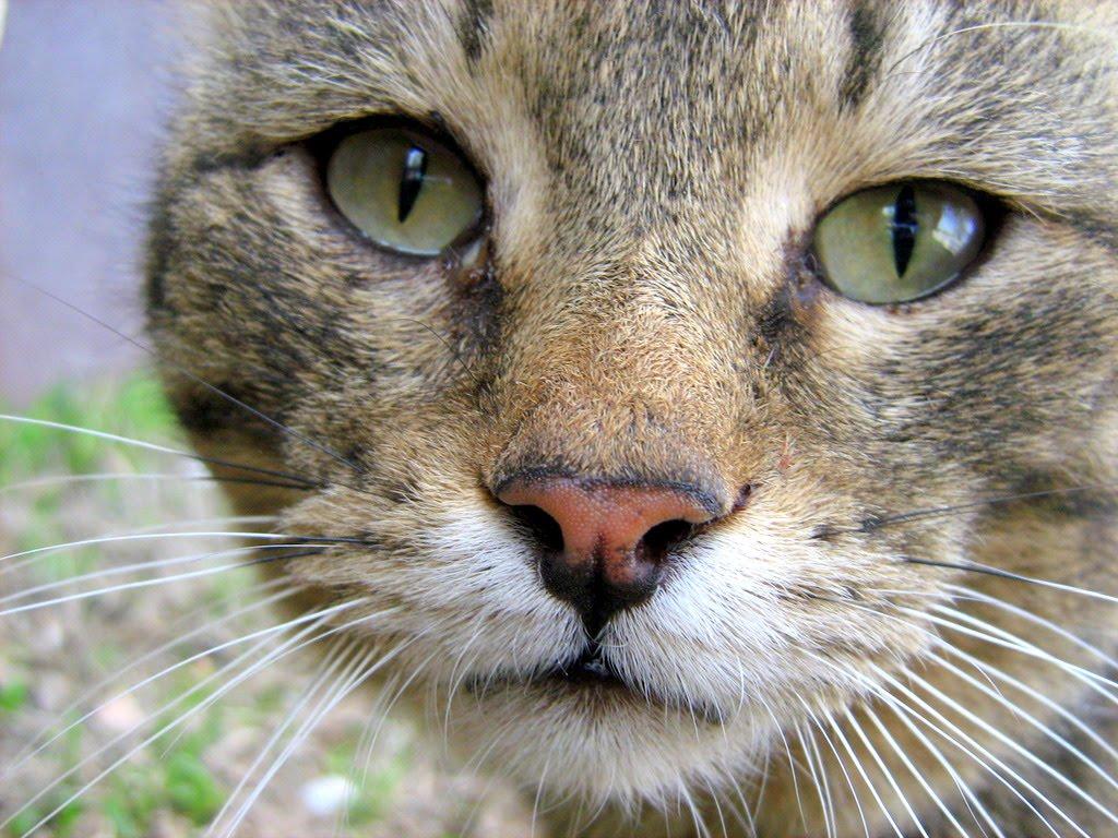 star war kitty