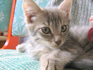 "Young Smoky Kitten in ""Catofamily: Part Five"""