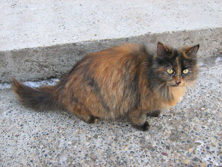 Waiting Ginger-Tortoiseshell Kitty