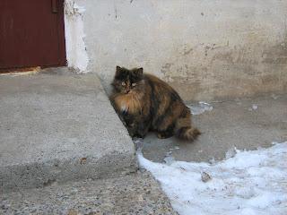 Waiting Ginger-Tortoiseshell Kitty