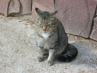 White Collar Tabby Cat: Part Two