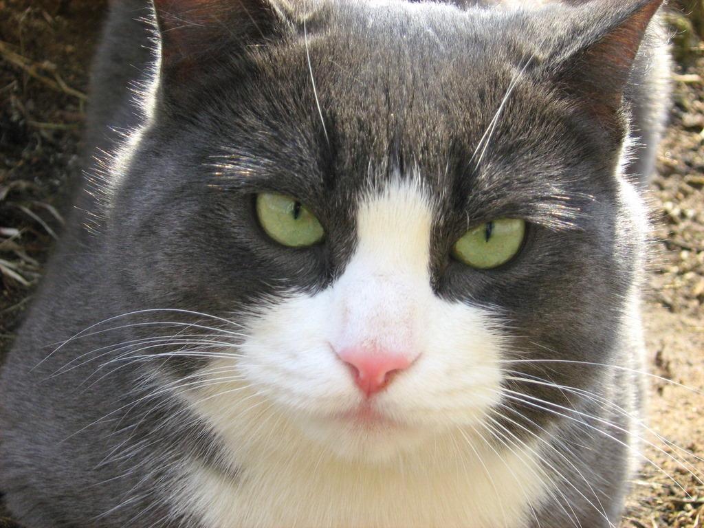 wet food for diabetic cats