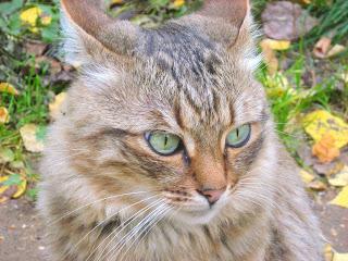 Green Eyes Cute Cat