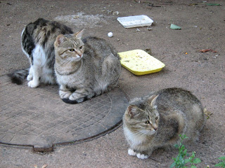 Homeless Cats