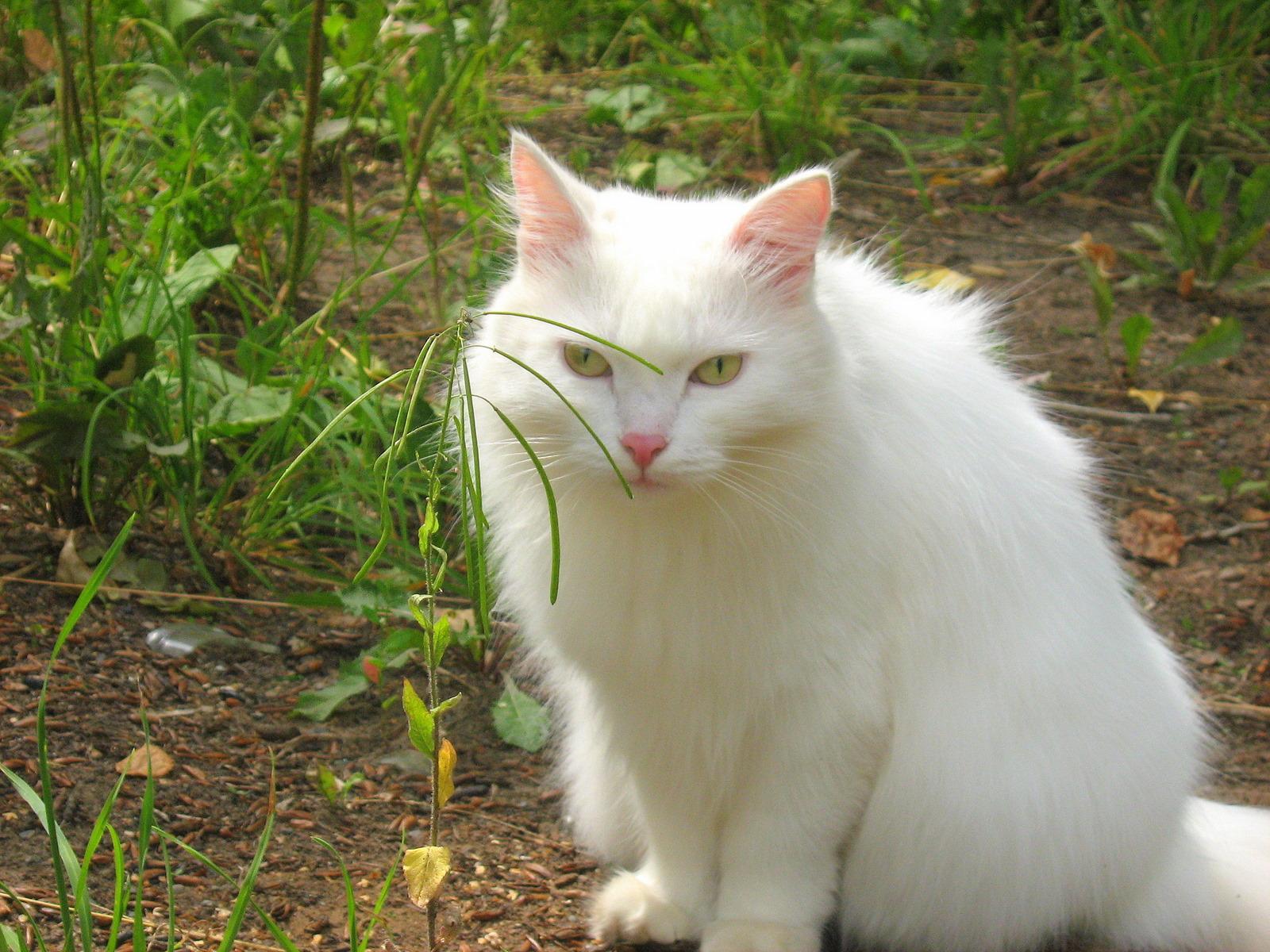 Super Cute Cats For Sale