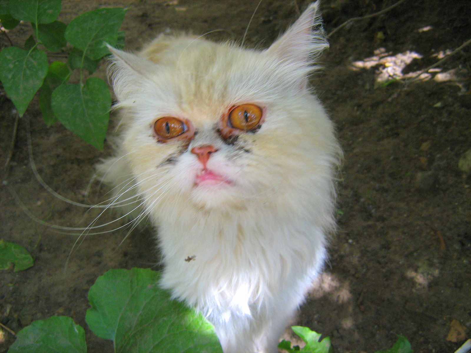 Ugliest Cat Pictures