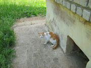GingerWhite Cat