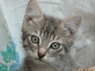 """Young Smoky Kitten in """"Catofamily: Part Two"""""""