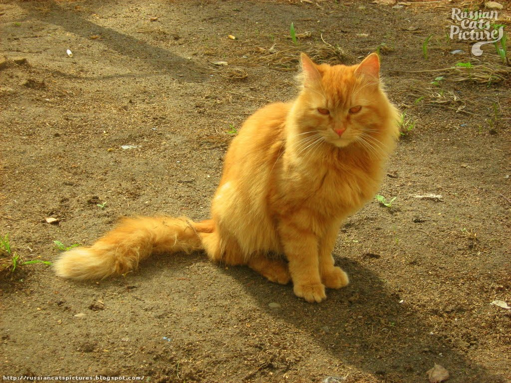cat stevens the wind lyrics