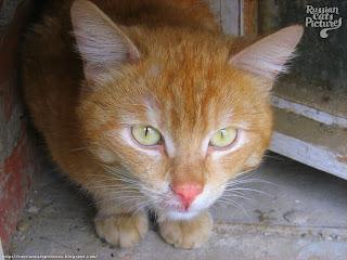 Yellow Tabby Cat Kittens