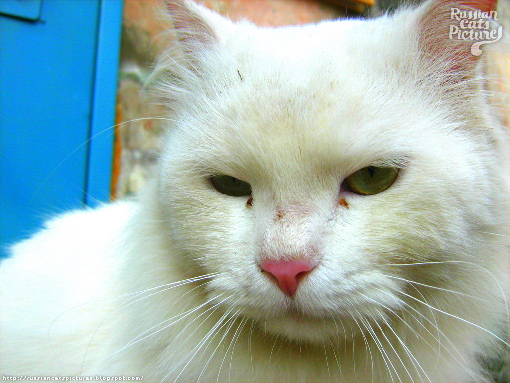 Green-Eyed White Sad Cat