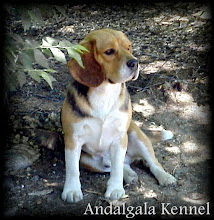 Andalgala Kennel
