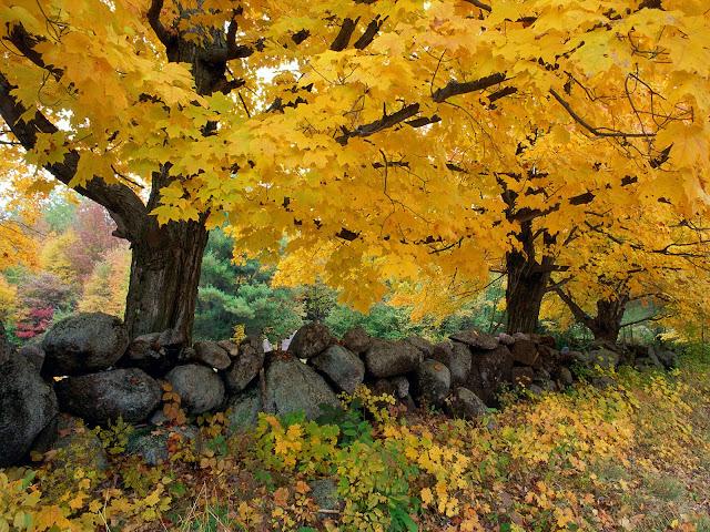 Geel herfst landschap met bomen