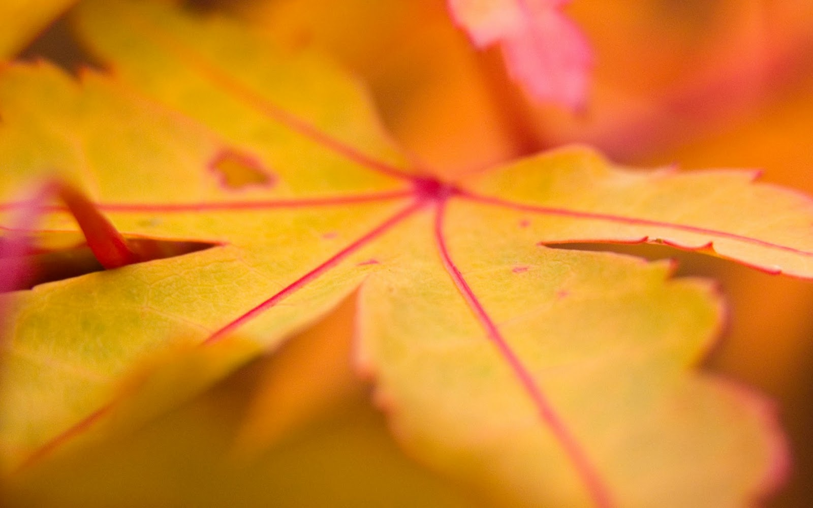 http://1.bp.blogspot.com/_RAlP3BmEW1Q/TQNiZkOEBmI/AAAAAAAABNA/lECKaOOEHeA/s1600/Herfst-achtergronden-herfst-wallpapers-11.jpg
