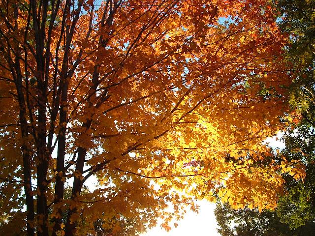 Herfst achtergrond met bomen en zon