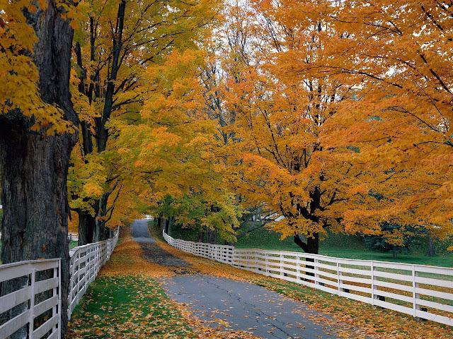 Achtergrond met hekken en bomen