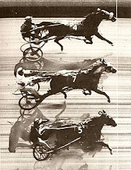 Triple Dead Heat - Freehold 1953