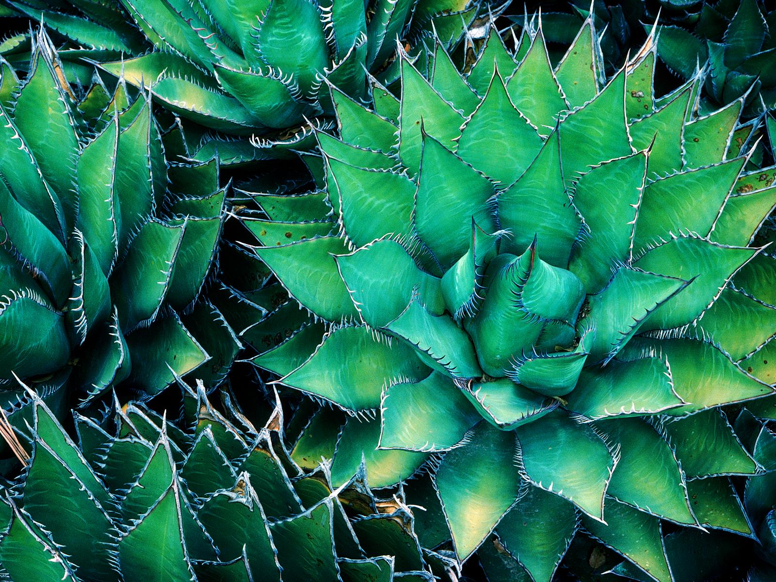 pineapple cactus wallpaper. Some short takes: