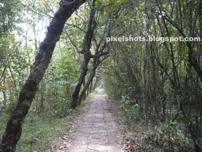 kumarakom bird sanctuary,cobbled lanes and mangroves of kumarakom bird sanctuary,kerala bird watching spots,mangrove trees,mangrove forest in kerala