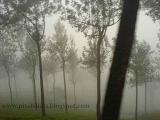 mistic scenery from munnar with trees inside the mist