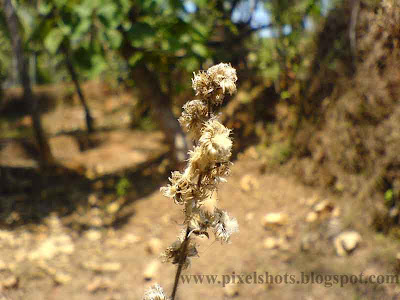 dried up grey flower photo from gardens