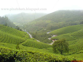 kerala-hill-station-photographs,Munnar-tea -estates,landscape sceneries photographs from munnar kerala,green tea plantations on the munnar mountain slopes