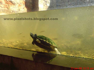 Tortoise in aquarium - photo#14