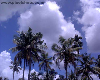 coconut trees under the clouds a landscape photograph during a train journey