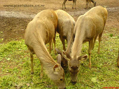 deers in the deer park of hill palace cochin kerala