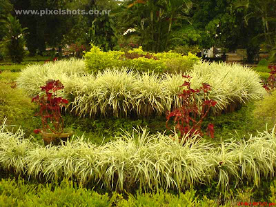 garden plants of the old cochin palace in kerala the hill palace