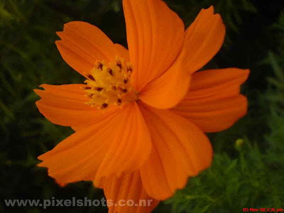 closeup photo of flower,bright orange coloured flower from the gardens