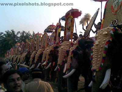 kerala elephants,elephant photo,pooram,temple festival,elephants in festival,kerala elephant pictures