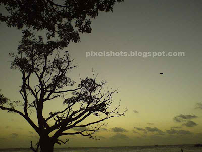 sunset scenery from fort cochin beach,tree photographed from beach after sunset,tree in sunset,picturesque sceneries