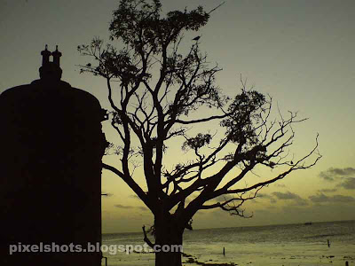 sunset afterglow and tree in beach of fort cochin,tree and sunset,steam boiler,tree and sunset,sunset horizon from fort cochin kerala,afterglow photos of sunsets