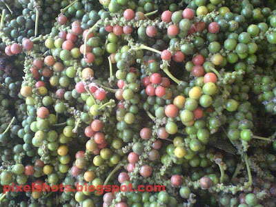 pepper,kerala spices photographs,pepper the spice of kerala named as black gold, cash crops, mulaku