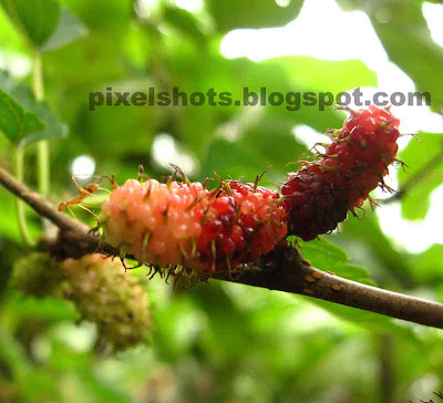 ripe-fruit,macro-fruit-photo,medicinal-fruit,natural-weight-loss,pixelshots-photography