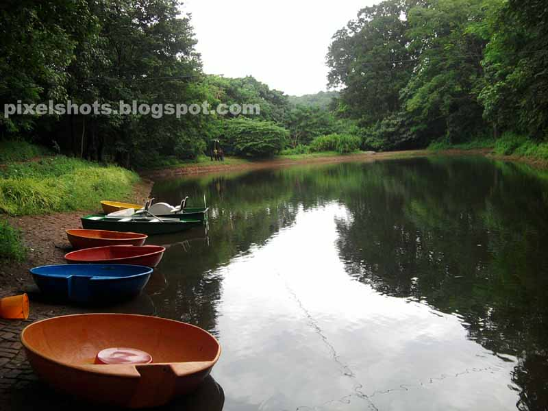 adventure zone pond and boats in thenmala, small pond called lotus pond of thenmala eco tourism project,kerala eco tourism pictures and info,eco tourism attractions,kerala tourism boating spots