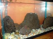 ¿Como instalo un acuario? Muchos creen que el poner una pecera (acuario) .