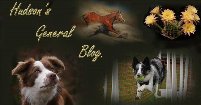 Hudsons General Blog