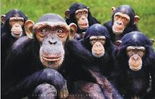 Primatas Urbanos