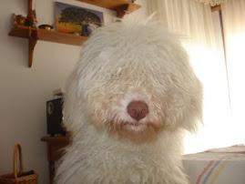 Otra de nuestras mascotas
