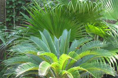 Jungle foliage around the pool