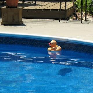 Ducky on patrol.