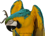 YouTube Bird Channel