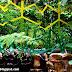Eden Nature Park - Tinubdan