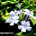 Flower Series - Violet/Purple