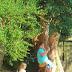 Tree Swings And Pom Poms