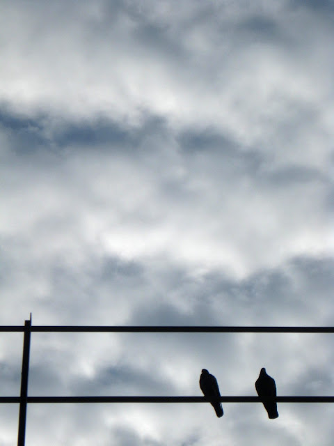 Two birds in silhouette with interesting clouds